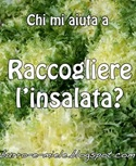 banner insalata